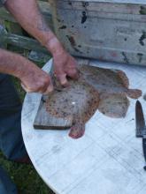 Rense en fladfisk