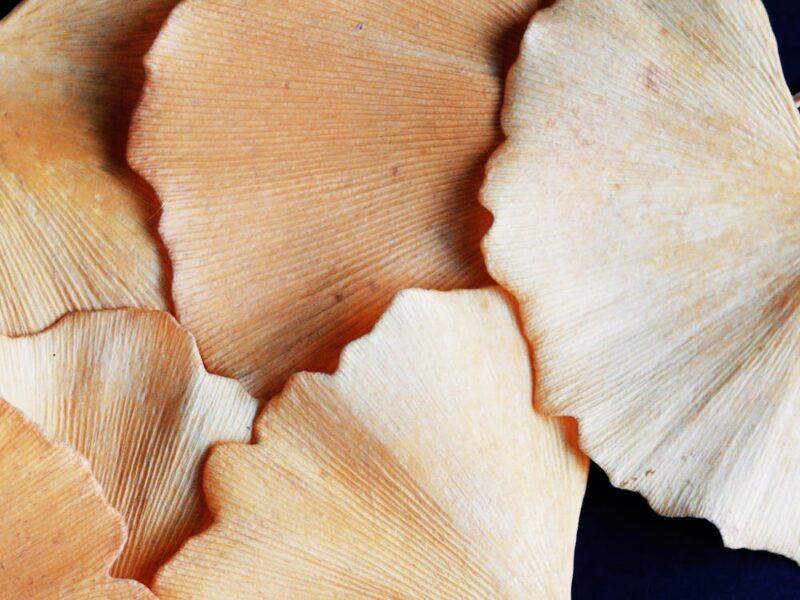 Tørrede svampe
